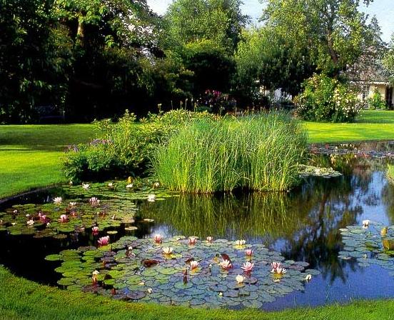 Ландшафтный дизайн озера фото