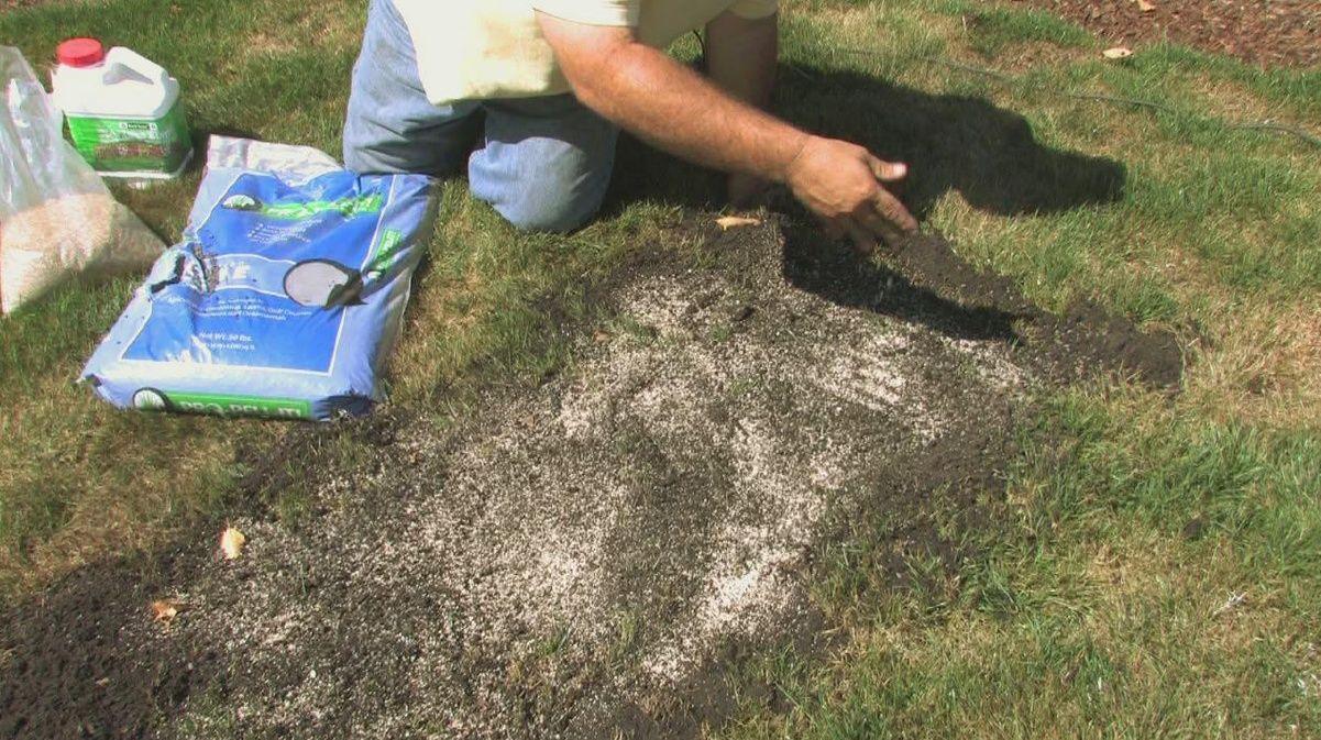 Газонная трава когда сажать 64