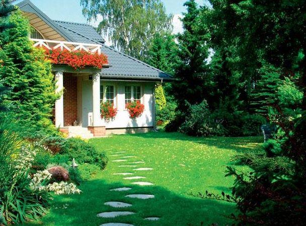 Газонная трава на даче фото