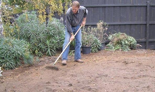 Как правильно сеять газонную траву